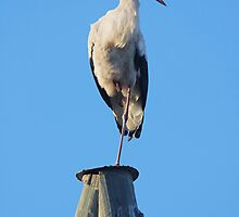 Stork on pole by fotorobs