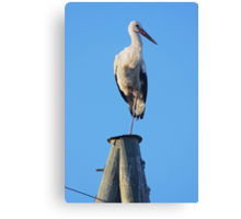 Stork on pole Canvas Print