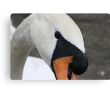 Portrait of a swan Canvas Print