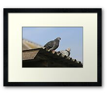 Pigeons on the roof. Framed Print