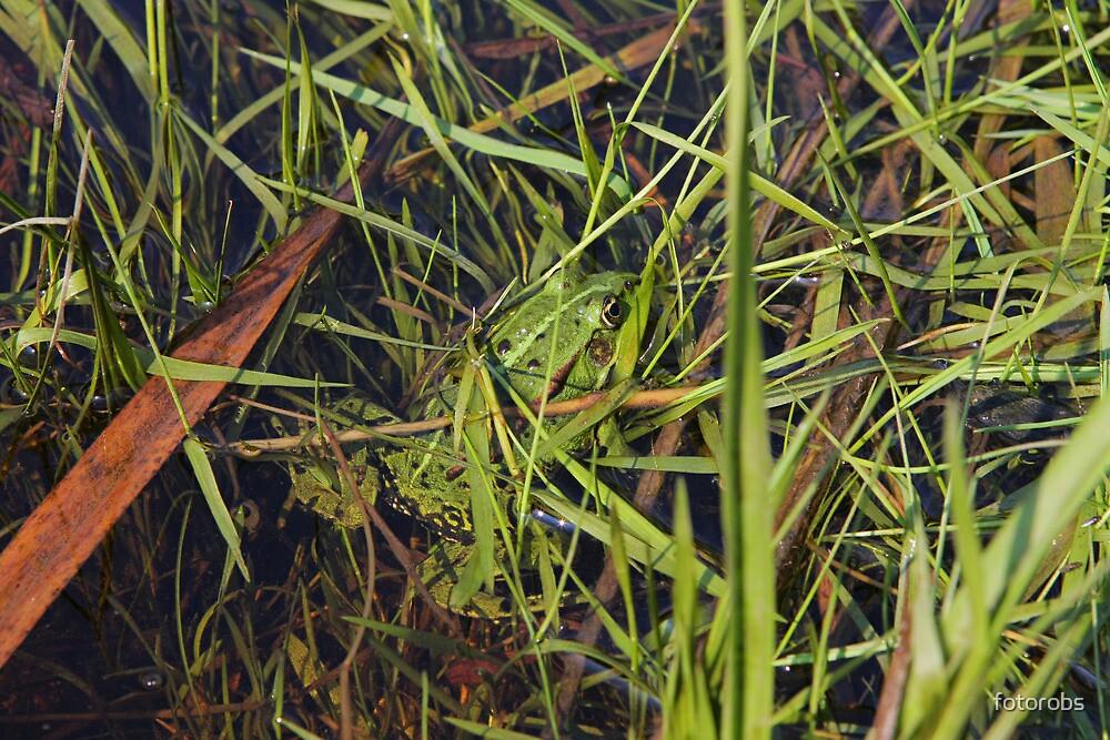 Frog in river by fotorobs