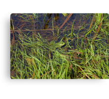 Frog in river Canvas Print