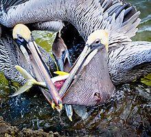 Battle at Vero Beach, FL by Susana Weber