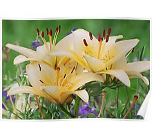 Beige lilly Poster