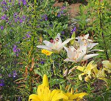 Lillies by fotorobs