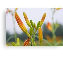 Lily in grass. Canvas Print