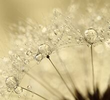 Dandelion Drops by Sharon Johnstone
