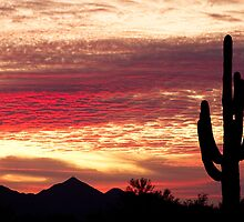 Tequila Sunrise 2 by Bo Insogna