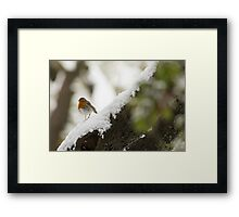 European Robin (Erithacus rubecula) perched on a branch in the snow,  Framed Print