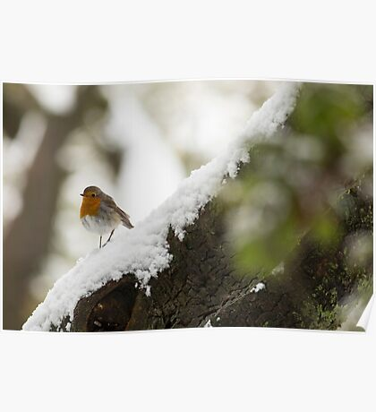 European Robin (Erithacus rubecula) perched on a branch in the snow,  Poster