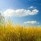 Unexpected - Landscape with Cattails and Cloud in Blue Sky by vanyahaheights