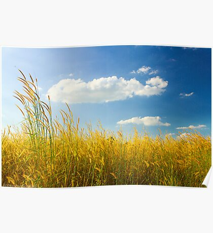 Unexpected - Landscape with Cattails and Cloud in Blue Sky Poster