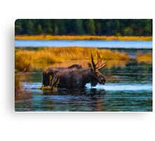 Algonquin Park Moose Canvas Print