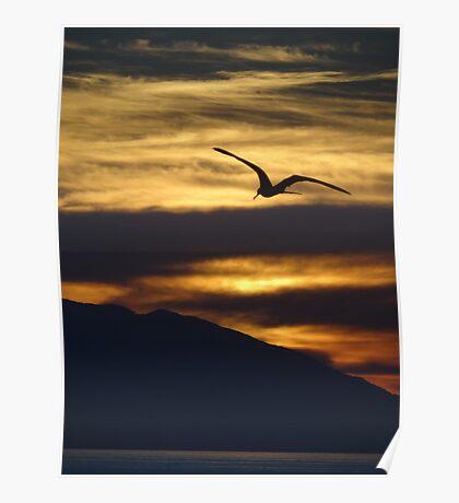 The night is coming the birds are going - La noche viene los pajaros regresan a sus lugares  Poster