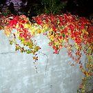 Fall On the Wall by Deborah Crew-Johnson