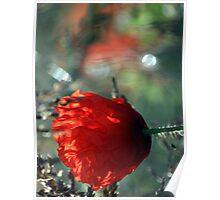 Poppy Dreaming Poster