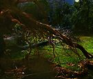 Uprooted by RC deWinter