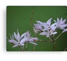Winter time time for orchids - Tiempo de invierno tiempo de las orqídeas Canvas Print