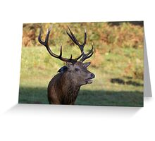 Red Deer & Jackdaw Greeting Card