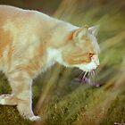 Cat 1 by Liev