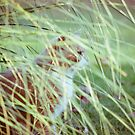 Cat 2 by Liev