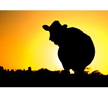 Sunset Silhouette Cow Photographic Print
