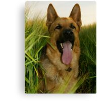The Shepherd In The Barley Field (colour) Canvas Print