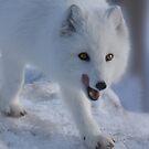 Winter in Canada by John44