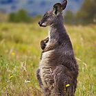 Wallaroo by Dean Cunningham