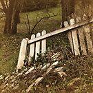 Broken Fences by Barbara  Brown