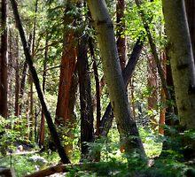 """""""Forest Of Dreams"""" by Glenn McCarthy"""