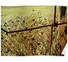 Wildflowers at the Cattle Fence Poster
