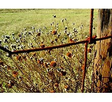 Wildflowers at the Cattle Fence Photographic Print