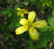 Springtime Buttercup by Gu88dek