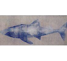 SHARK SILVER GREY Photographic Print