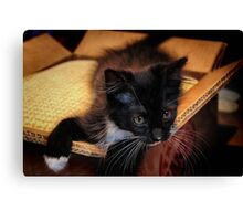 Kitten in a Box (Ready to Wrap) Canvas Print