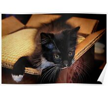 Kitten in a Box (Ready to Wrap) Poster