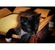 Kitten in a Box (Ready to Wrap) Photographic Print