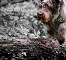 Brown Roan Italian Spinone in Action Sticker