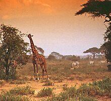 Africa by Georgina Steytler