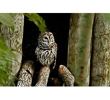 Hoot Owl... Photographic Print