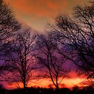 Trees In The Winter Glory At Dawn  by WOBBLYMOL