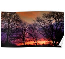 Trees In The Winter Glory At Dawn  Poster