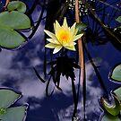 My Pond Locut by Burnie