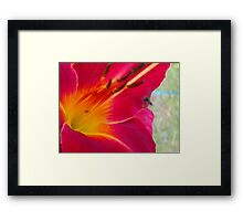 Daylilly in bloom for 4th Season Framed Print