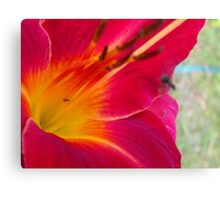 Daylilly in bloom for 4th Season Canvas Print