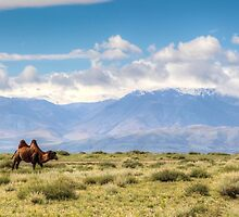 The Wilderness of Mongolia by pixog