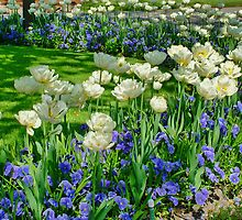 Tulips and Viola's by AnnDixon