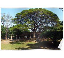 Eco Tree Poster