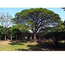 Eco Tree Photographic Print
